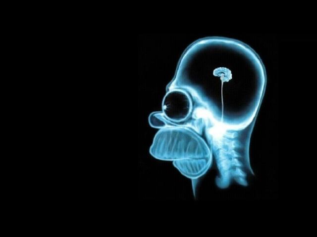 homer_simpson_brain