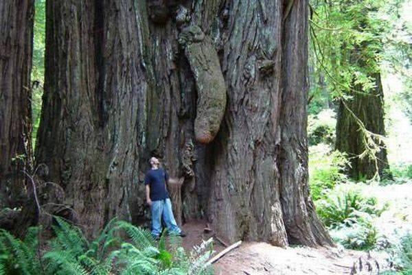 fallo_albero